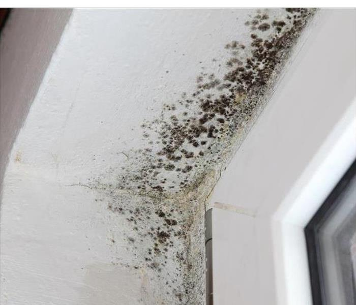 Mold Remediation Does Hidden Mold need to be Remediated?
